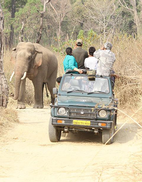 Jeep Safari in Jim Corbett Uttarakhand